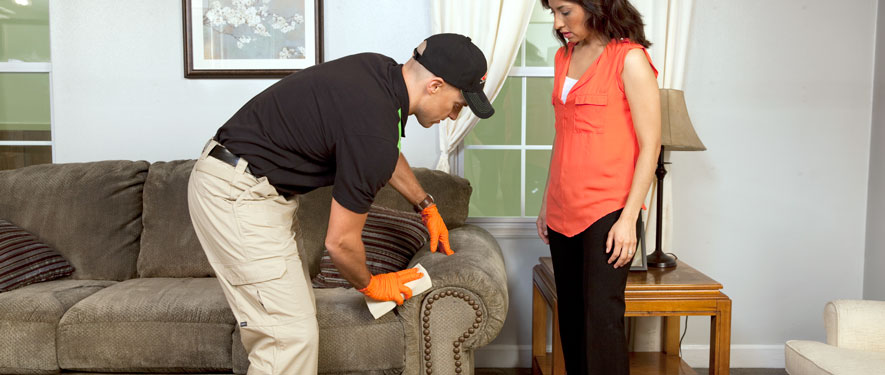 Walnut Creek, CA carpet upholstery cleaning
